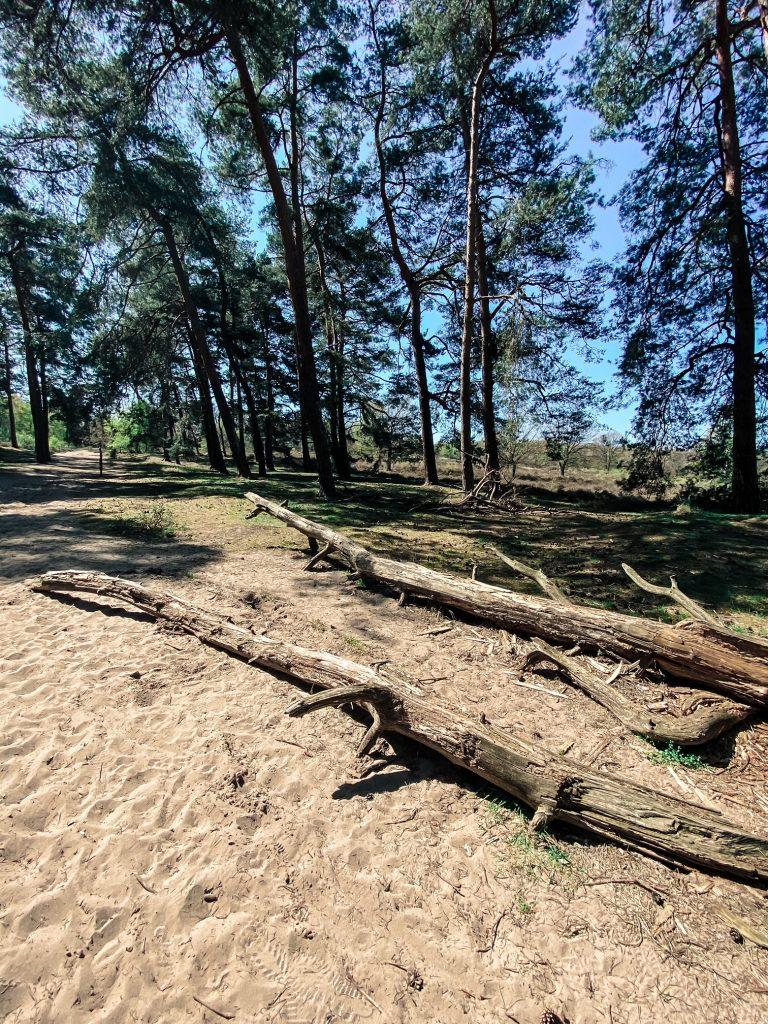 Wahner Heide, Titel, Baum, Hike, Wandern, Wanderung, Köln, Landschaft, Kiefern, Boden, Eiszeit