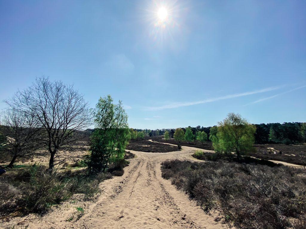 Wahner Heide, Titel, Baum, Hike, Wandern, Wanderung, Köln, Vegetation, Landschaft, Landscape
